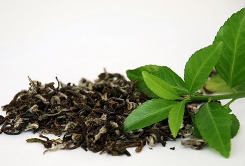 Горсть зеленого чая и свежие листья