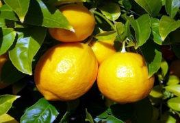 Преимущества осветления волос с помощью лимона