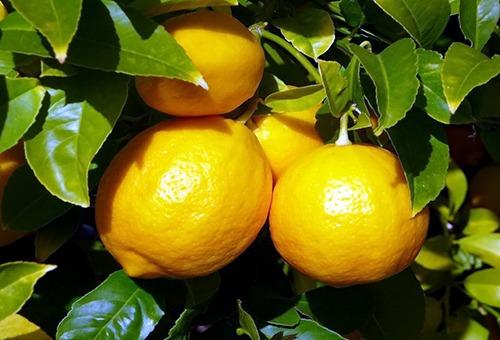 Чем объясняются полезные свойства лимона