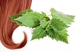 Крапива для красоты волос